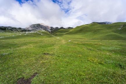 meadow-918963_1920